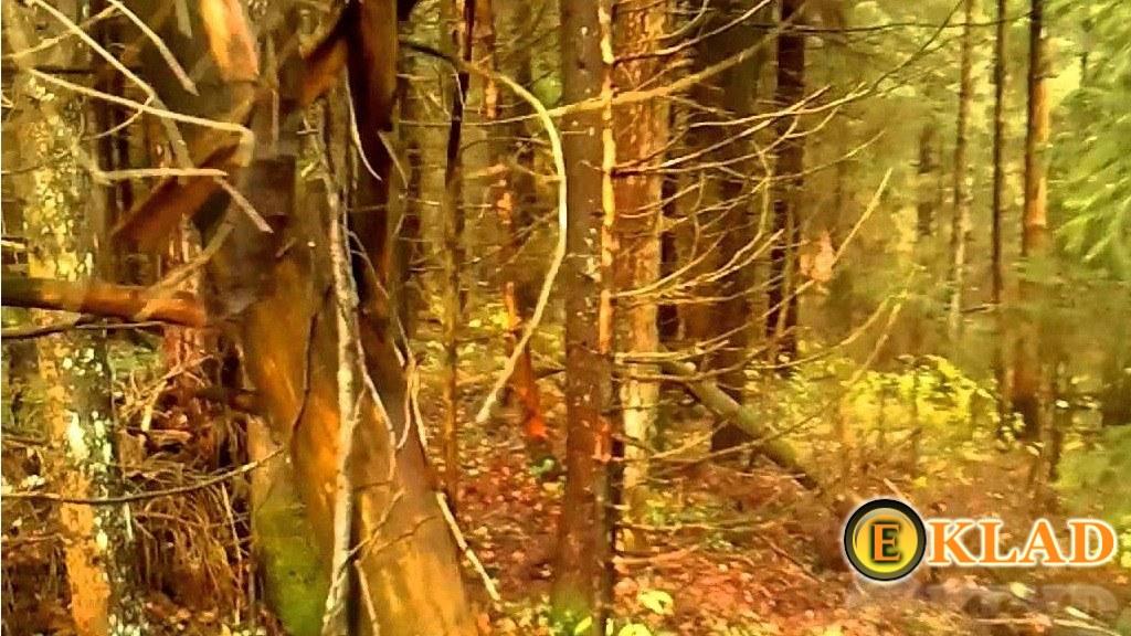 участок уходящий в лес